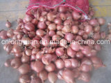 Chinese New Crop Shallot with Mesh Bag
