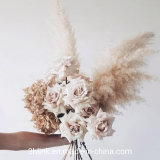 Wholesale Preserved Dried Natural Artificial Pampas Grass for Sale