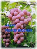 High Quality Pine Bark Extract & Grape Seed Extract