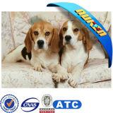Wholesale Lenticular Dog 3D Picture