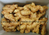 High Quality Fresh Ginger (100G+, 150G, 200G+, 250G+)