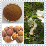 Vitamin C Cherokee Rose Fruit Extract/Fructus Rosae Laevigatae Extract Rose HIPS Extract