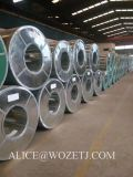 Galvanized Coil Dx51d Z Galvanized Steel Coil