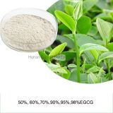 Green Tea Polyphenols EGCG Plant Extract