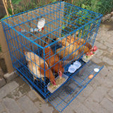 Stainless Steel Galvanized Wire Mesh Cage Layer Chicken Coop on Sale