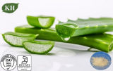 Natural Freeze/Spray Drying Aloe Vera Gel Powder