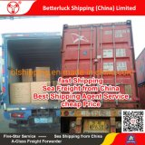 cheap fast shipping agent from Shenzhen to Auckland Sea Freight
