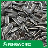 2020 High Quality New Crop Sunflower Seeds 3638