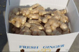 Fresh Ginger Good Quality and Low Price