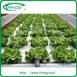 Agricultural hydroponics system for growing