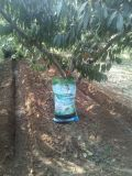 Multifunctional Biochar Organic Fertilizer with Low Price