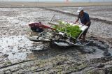 Handle Type Rice Transplanter
