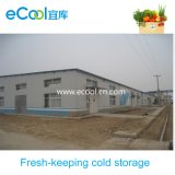 Large Size Cold Storage for Vegetables and Fruits Distribution Center and Warehouse