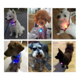 Dog Cat Pet Collar Light 6PCS, Waterproof LED Dog Collar Safety Night Walking Lights Keychain with Stainless Steel Carabiner, ID Tags, Battery Included (6 PCS)