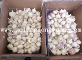 Fresh Garlic From Jinxiang Professional Factory