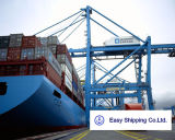 Consolidate Sea Freight/ Air Freight/Customs Clearance From China