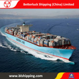 Sea Freight From China to Tanjung Pelepas Malaysia Shipping Forwarder