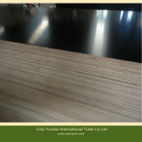 Chinese Black Film Faced Plywood for Construction