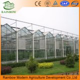 High Quality Factory Prices Hot Galvanized Steel Frame Large Venlo Type Multi-Span Glass Greenhouse for Agricultural