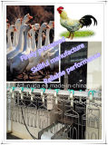 Automatic Poultry Farm Equipments/Stainless Steel Chain/Slaughtering Equipment
