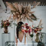 Wholesale Preserved Dried Natural Artificial Pampas Grass for Wedding Decoration