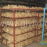 Fresh Fat Ginger at Competitive Price