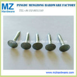 3.0mmx40mm Electro Galvanized Roofing Nail for Chile