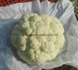 New Crop Vegetable Fresh Cauliflower