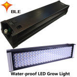 Manufacture Water Cooled for Greenhouse LED Lamps 490W
