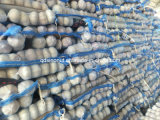 2017 New Crop Chinese Fresh Garlic