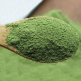 Top Quality Natural Spinach Powder