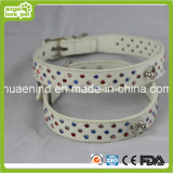 Various Drills Pet Collar Dog Collar