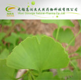 Bilobalide Ginkgo Biloba Extract with Low Price on Sell