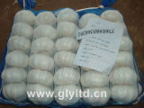 Carton Packing Normal White Garlic (4.5cm and up)