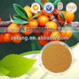 Natural Seabuckthorn Fruit Extract Seabuckthorn Flavone