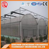China Traditional Multi Span Caraway Plastic Greenhouse
