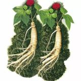 Panax Ginseng Extract, Ginseng Root Extract, Ginsenosides 10%, 20%HPLC
