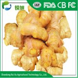 Wholesale Prices for Fresh Ginger