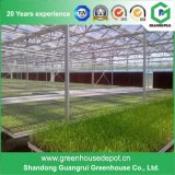 Glass Greenhouse Polyurethane Agricultural Plastic Houses Hydroponics