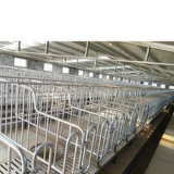 Pig Farm Cast Iron Farrowing Crate Pen Cheap Gestation Crates