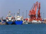 Fast Sea Shipping From Guangzhou to Manzanillo/Lazaro Cardenas/Mexico City/Veracruz