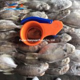 Manufacturing Frozen Seafood Pomfret