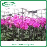 European Style Multi Span Rose Greenhouse for agjriculture