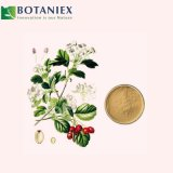 Plant Extract Epimedium for Libido Enhancer