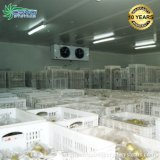 Drop in Freezer Cold Room Refrigeration Unit Guangzhou Condensing Unit