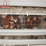a Type Best Price Poultry Farm Egg Layer Chicken Cages