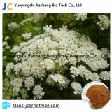 New Arrival Osthole Cnidium Monnieri Extract Quality Guaranteed