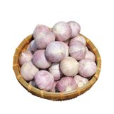 Fresh Solo Garlic From Yunan Origin