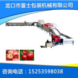 Salable Fruit Washing Drying and Waxing Machine