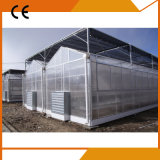Plastic Agriculture Greenhouse for Sale From Big Greenhouse Manufacturer in China